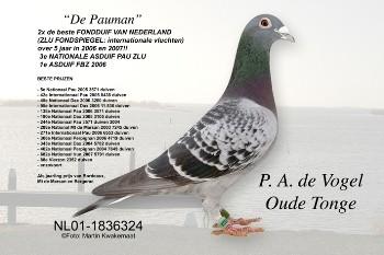 Lijn Pauman
