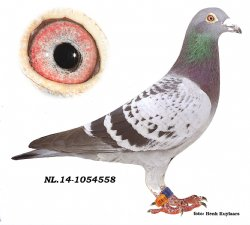NL14-1054558 De Pestkop