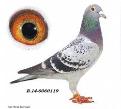 BE14-6060119 De 119