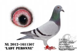 NL12-1611507 Lady Peronne