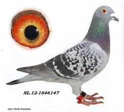 NL12-1646147 De 147