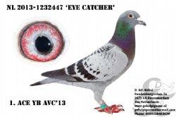 NL13-1232447 Eye Catcher