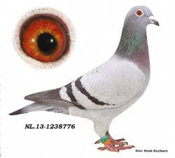 NL13-1238776 De 776