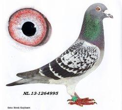 NL13-1264995 De 995