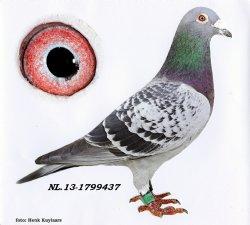 NL13-1799437