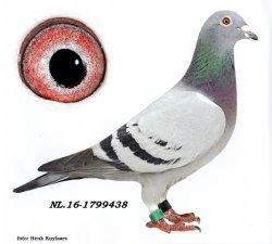 NL13-1799438 Allroundertje