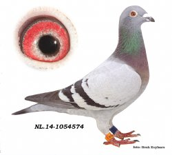 NL14-1054574 Nika