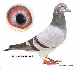 NL14-1054642 Inbred Eye Catcher
