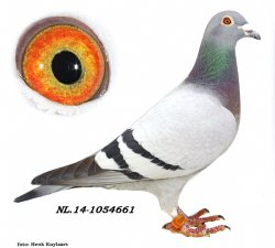 NL14-1054661 Future Bullet