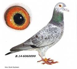 BE14-6060099 Son Pitbull