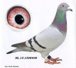 NL15-1508408 De 408