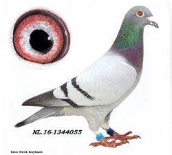 NL16-1344055 New Pitbull