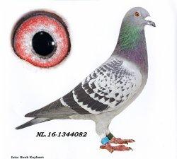 NL16-1344082 China Man