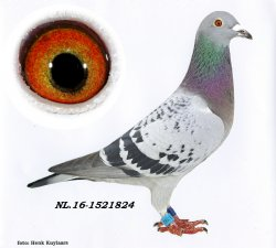 NL16-1521824 Small One