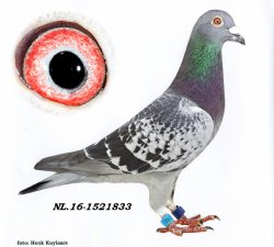 NL16-1521833 No Hurry