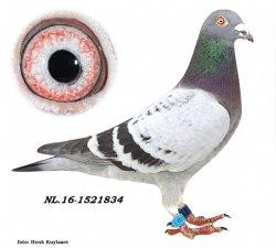 NL16-1521834 Eye Catchers Beauty