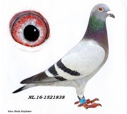 NL16-1521838 Madame Blue