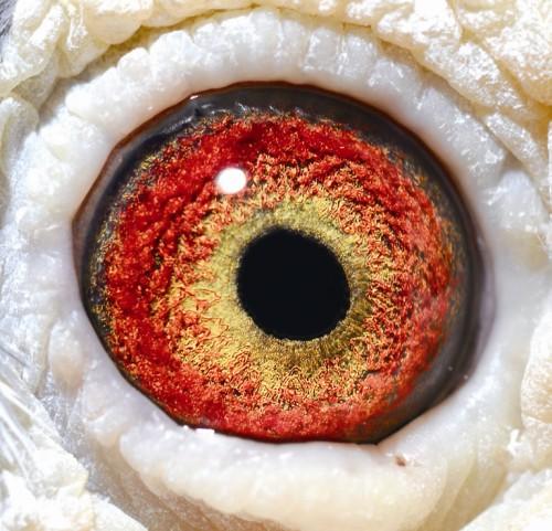 Eye NL01-1780945