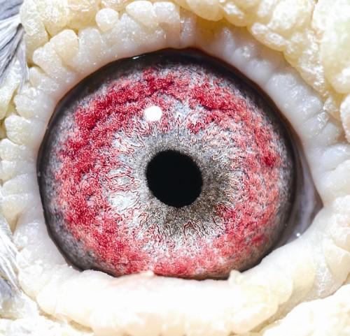 Eye NL02-1533927