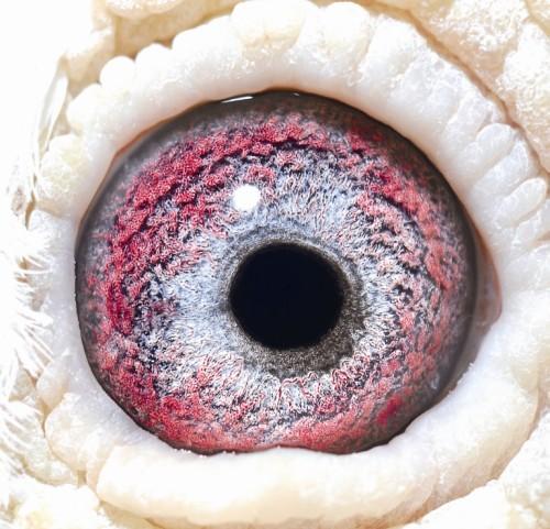 Eye NL 00-1868201