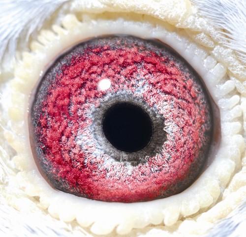 Eye NL07-1002135