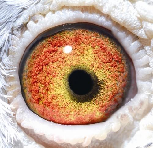 Eye NL09-1108048