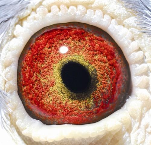 Eye NL08-1455334