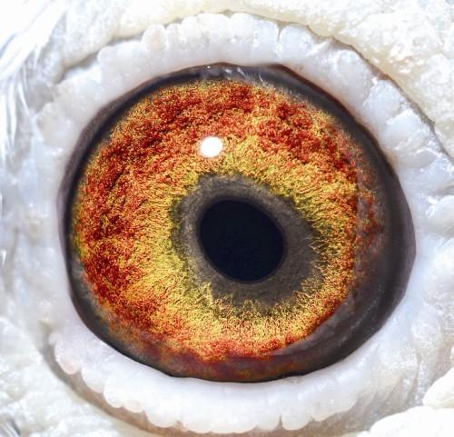 Eye NL09-1103623