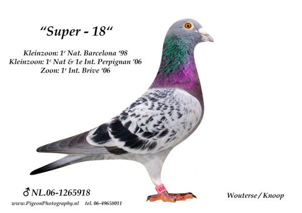 Super 18