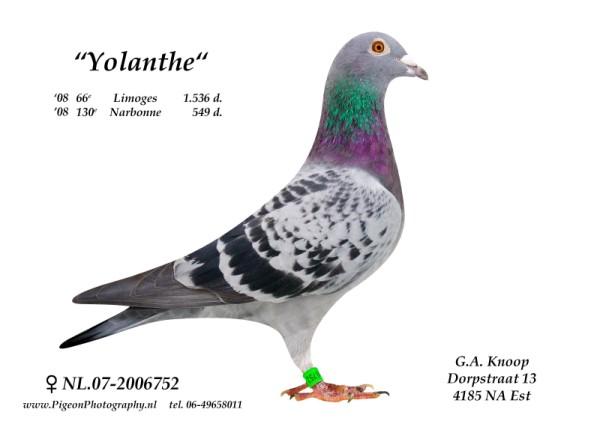 Yolanthe