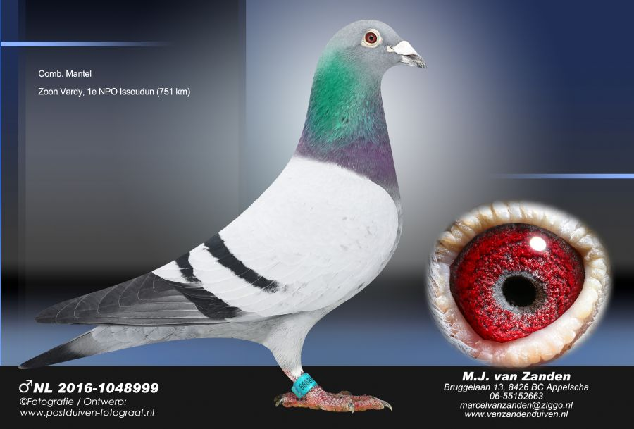 http://www.duivensites.nl/marcelvanzanden/content/NL%202016-1048999_8964.jpg