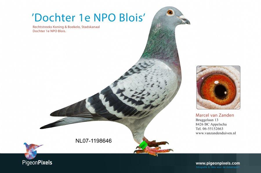 http://www.duivensites.nl/marcelvanzanden/content/NL07-1198646_6385.jpg