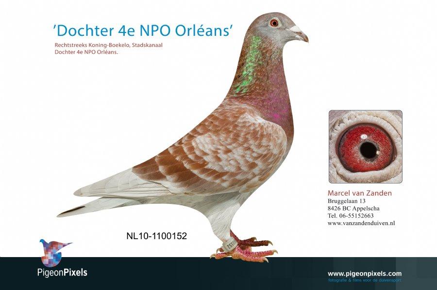 http://www.duivensites.nl/marcelvanzanden/content/NL10-1100152_6067.jpg