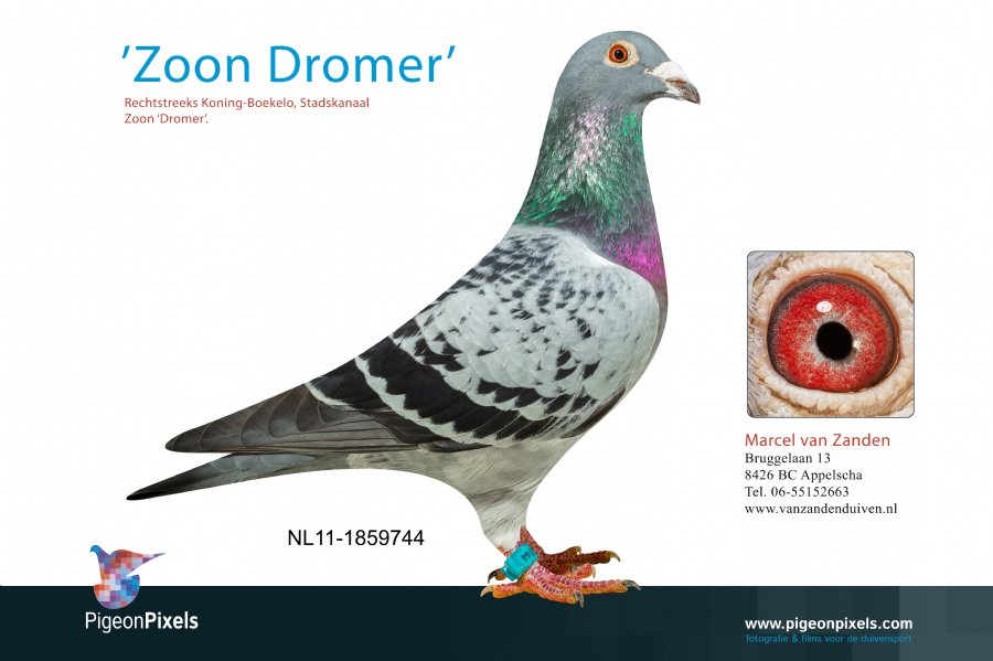 http://www.duivensites.nl/marcelvanzanden/content/NL11-1859744_6954.jpg