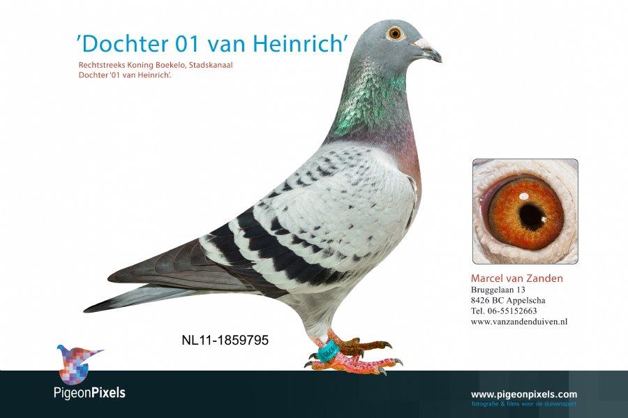 http://www.duivensites.nl/marcelvanzanden/content/NL11-1859795_9358.jpg