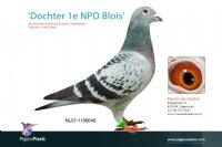 Foto 1 Dochter De Blois (1e NPO)