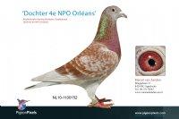 Foto 1 Dochter Orleans Doffer (4e NPO)