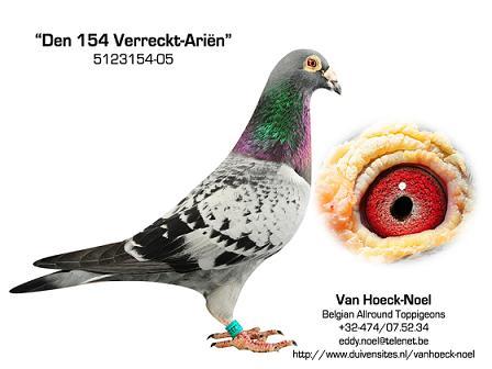 154 Verreckt-Ariën