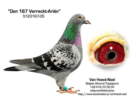 167-05 Verreckt-Ari�n