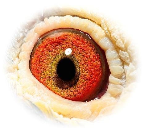 Eye 518 doffer