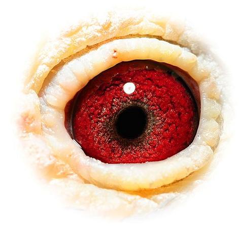 Eye 750 doffer 02