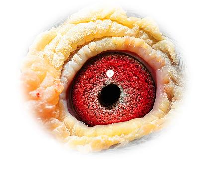Eye 154 Verreckt-Ariën