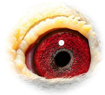 Eye 167-05 Verreckt-Ariën