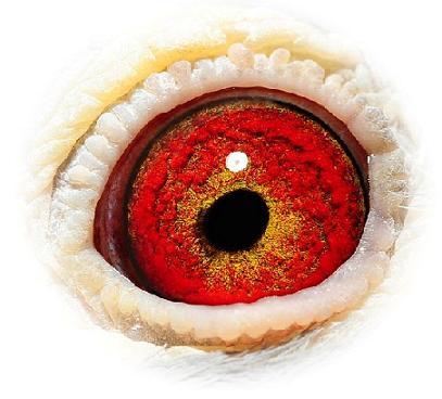 Eye 608-06 Marcel Aelbrecht