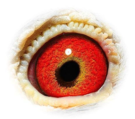 Eye 454-07 P&J Roziers