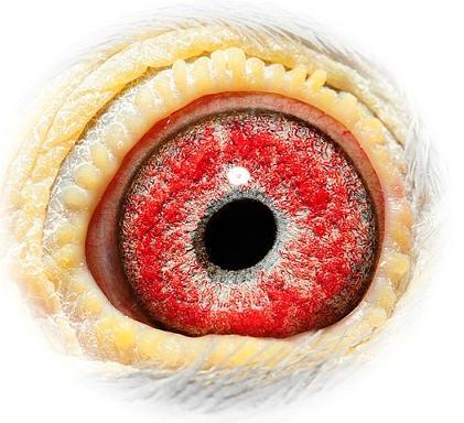 Eye 090-06 Jan Van de Pasch
