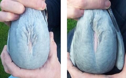 Verluchting duivenhok maken