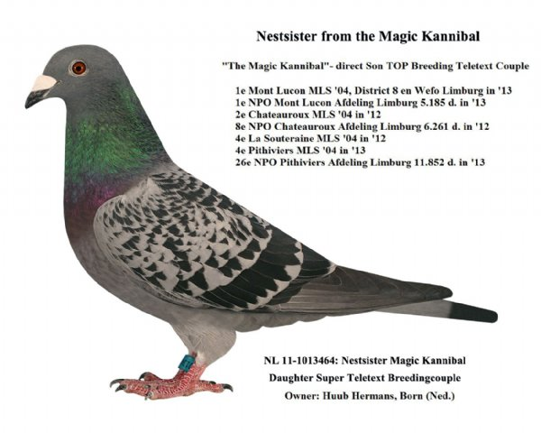 Nestsister Magic Kannibal