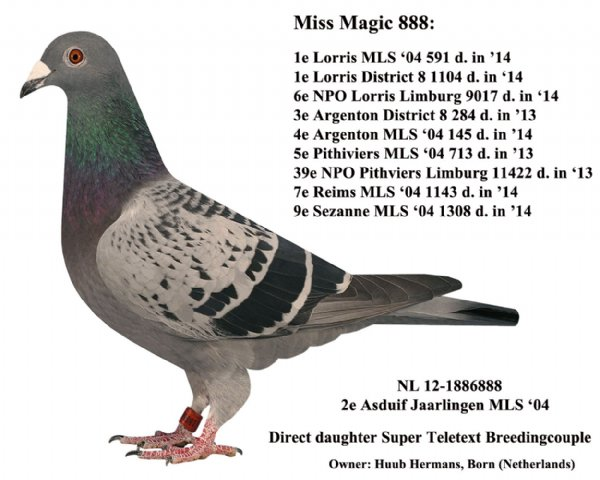 Miss Magic 888