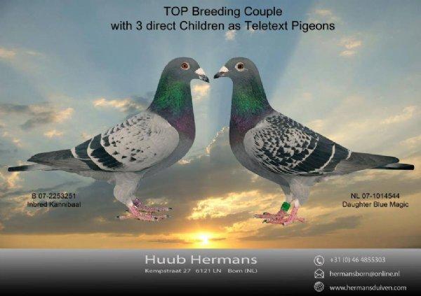 Top Teletext Breeding Couple